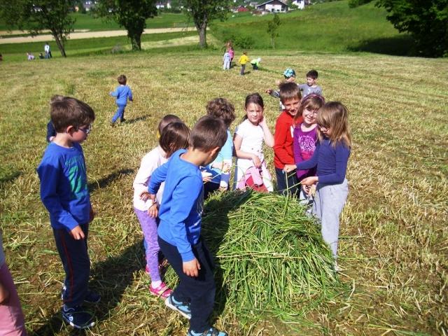 Piknik na travi