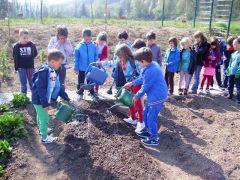 Sončki vrtnarji1