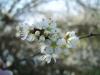 sara-podlogar-8-r-cvet