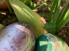jakob-bruno-vidmar-1-r-velikonoc48dna-jajca